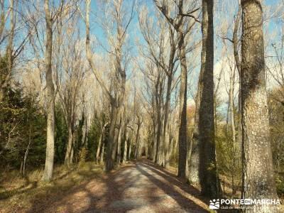 Bosque de Finlandia - Valle de El Paular;senderismo picos europa excursiones a la montaña tienda de
